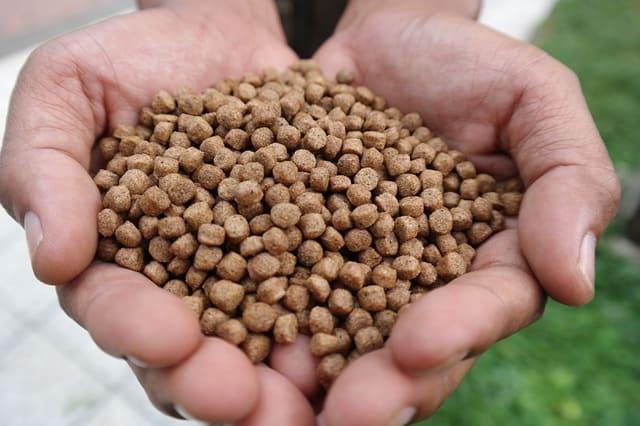 Betta Fish Foods Live Dry And Frozen Zenaquaria