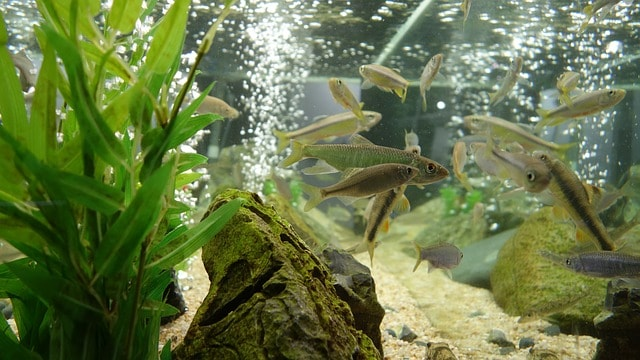 Nitrogen cycle explained, fish tank cycle