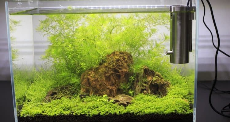 Planted Rimless Nano Tank with Filter