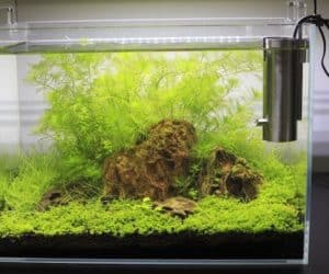 Aquascaped nano tank planted