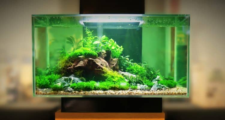 Example of a planted tank with adequate light.