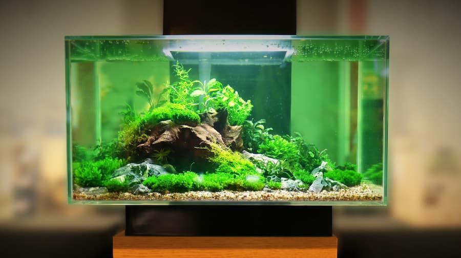 Best Led Fish Tank Lights Grow Plants Faster Zenaquaria