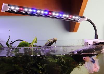 Finnex stingray clip light growing plants in a nano betta fish tank.