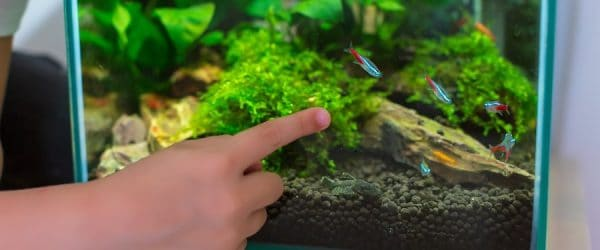 Small planted tank with neon tetras