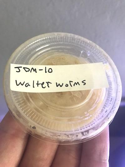 Walter worm culture for aquarium fish.
