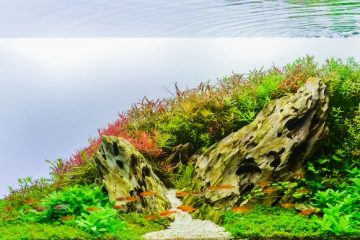 Aquascape with dragon stone and plants.