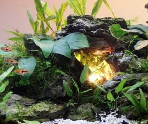 Cave aquascape in 5 gallon aquarium.