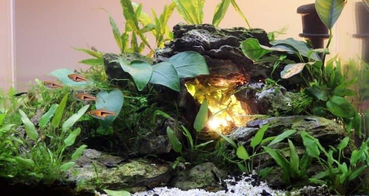 Cave aquascape in 5 gallon aquarium.
