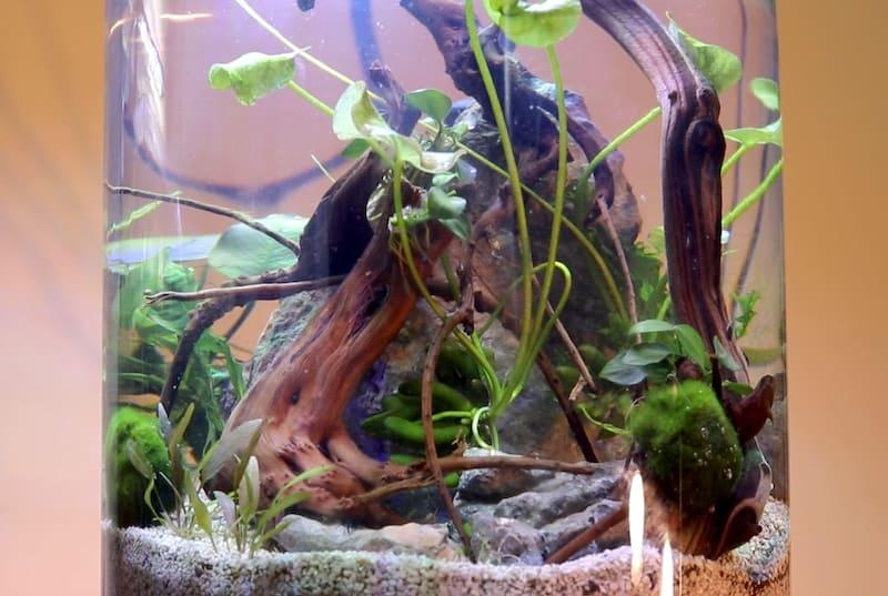 Nano Shrimp Tank Aquascape In A Jar No Filter No Co2 Zenaquaria