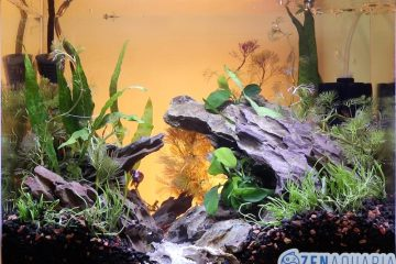 Dragon stone aquascape with live plants.
