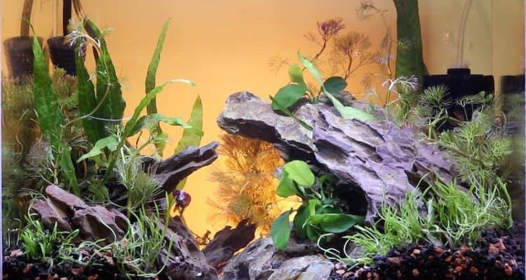 Dragon stone aquascape with live plants.