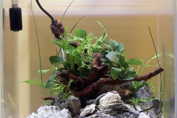 Spiderwood Aquascape Example