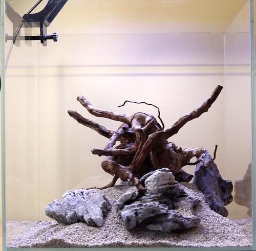 Positioning spiderwood in aquascape.