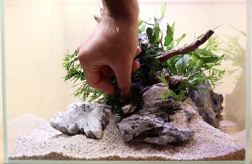 Adding plants to aquarium.